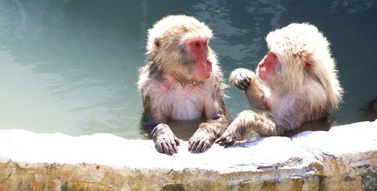 サルの入浴(寒いのは嫌い)